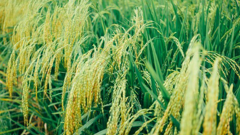 agricultural app development