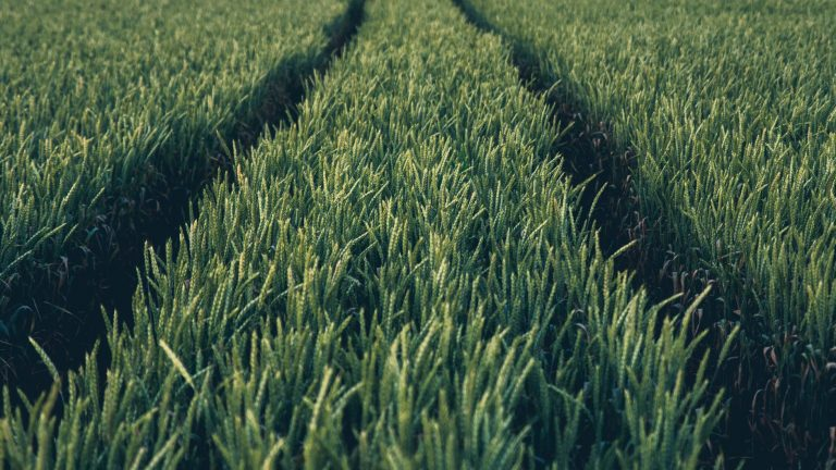 agriculture website development
