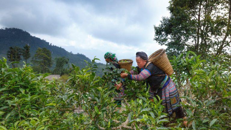 tea-estate app development