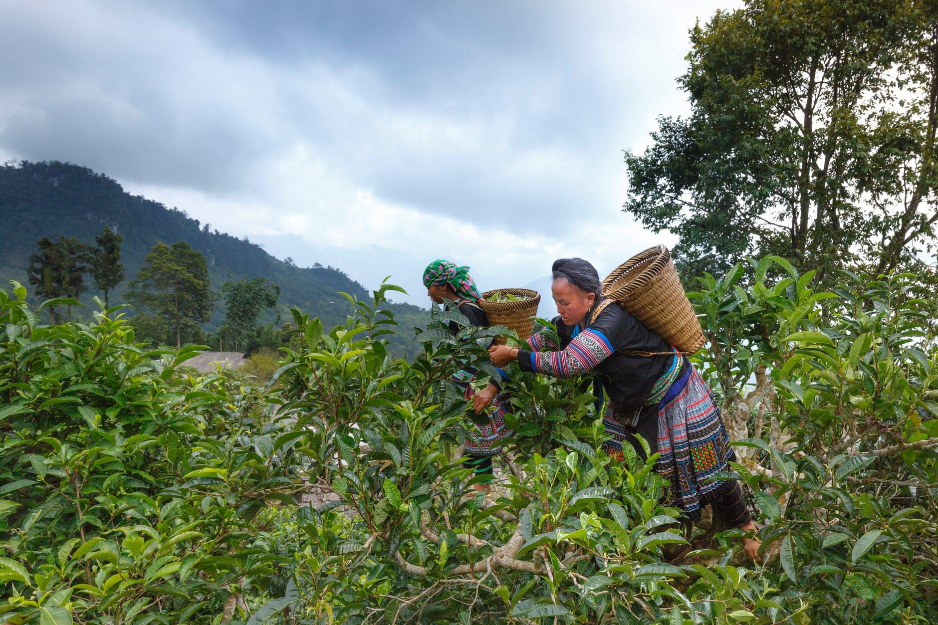 Tea-estate App Development:8 Factors to Look about the Company