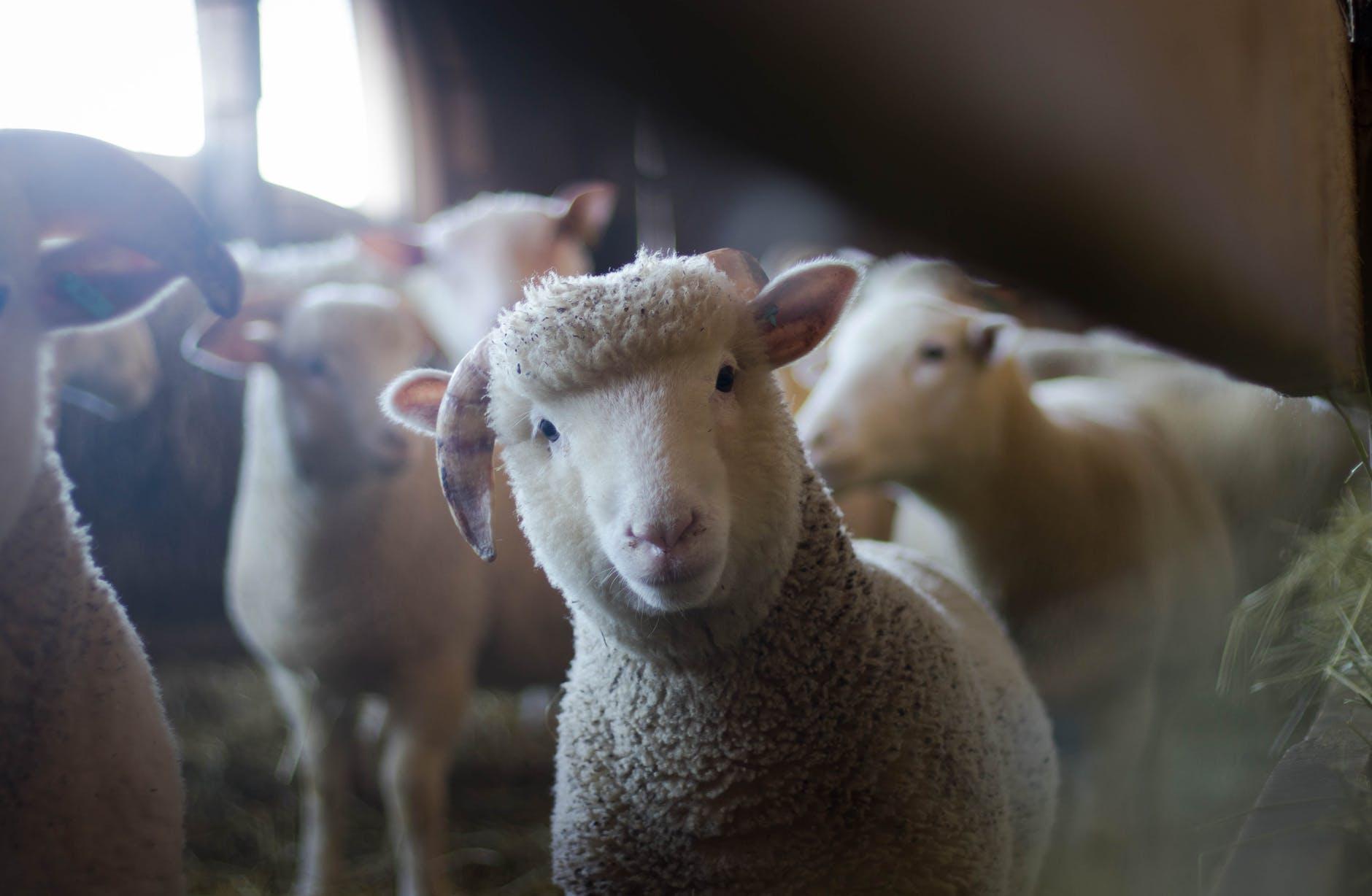 8 Advantages of Farming App Development for Your Farming Business