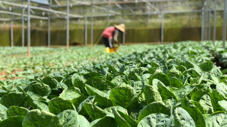 Farming Software