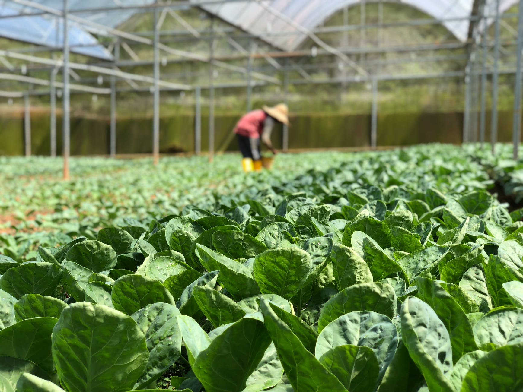 How Farming Software helps in Increasing Productivity?